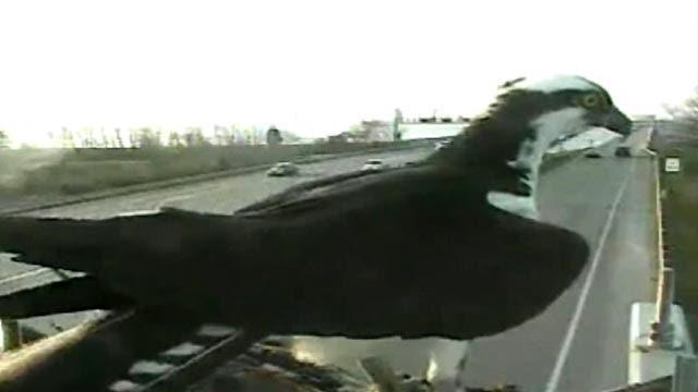 Grapevine: Bird battles Maryland Transportation Authority