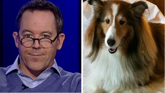 Gutfeld: Why the world would kill for an American dog's life