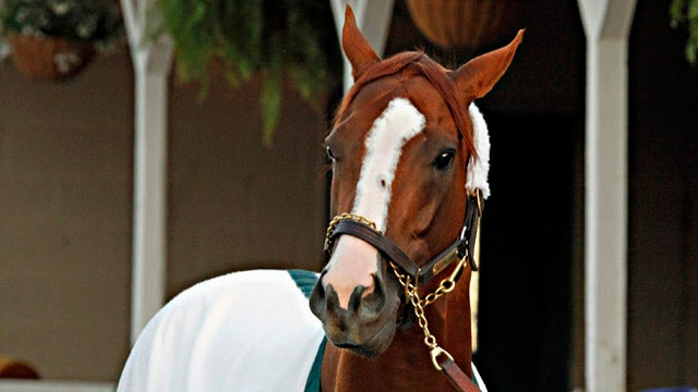 Rags-to-riches story of California Chrome