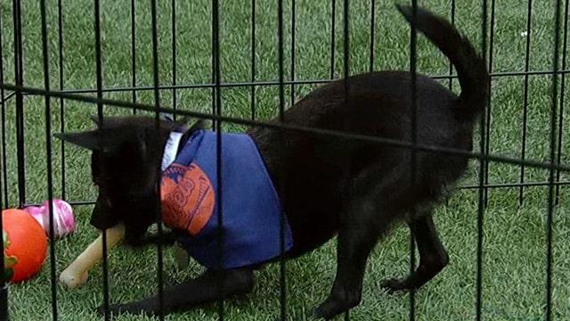Take your dog to the ballgame