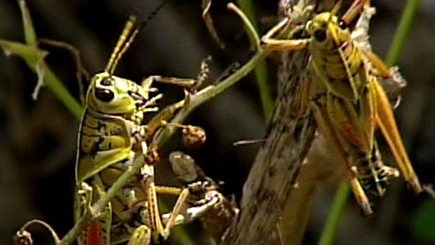 Group says insects are underutilized source of food, nutrients