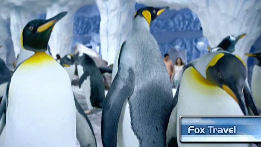 SeaWorld Orlando's new attraction Antarctica: Empire of the Penguin has 250 penguins, a ride that includes hand-blown icicles and so much more