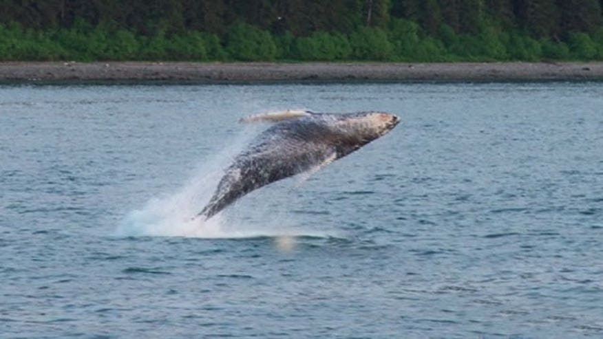 A range of adventure companies offer an up-close look at Alaska's wildlife from the water.