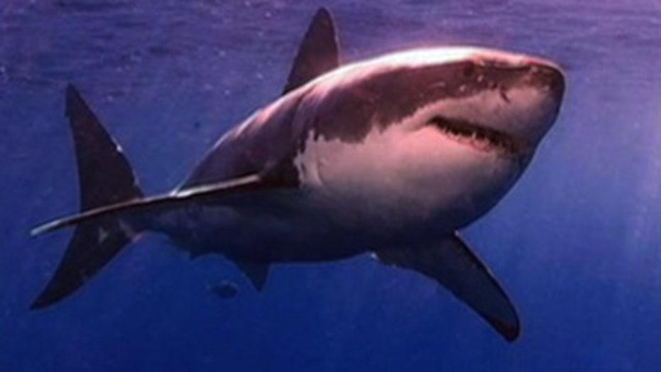 Sharks Similar to Serial Killers?