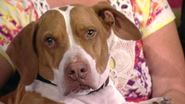 Meet the world's ugliest dog