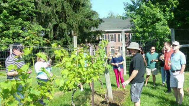 Small business spotlight: Unionville Vineyards