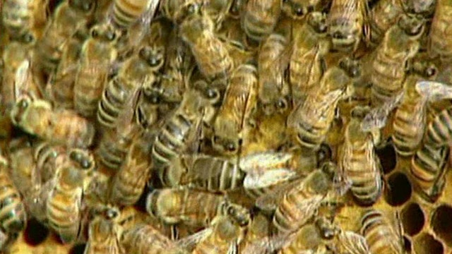 Memorial to honor 5,000 bees that died in Oregon parking lot