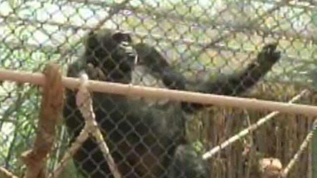 Zoo animals beat the heat