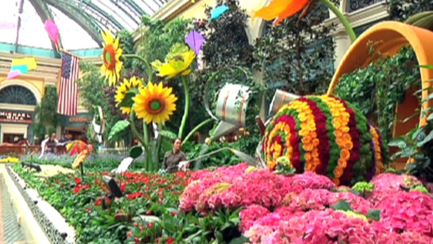 Matt Finn takes us inside the private collection of Bellagio conservatory props