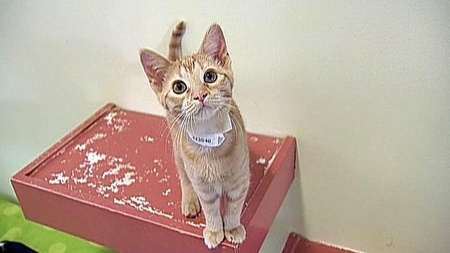 Okla. tornado pets are up for adoption