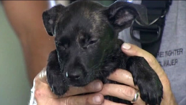Ruff ride: Pup found trapped in car engine