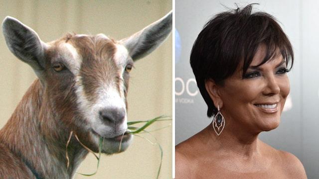 Fox Flash: Kris Jenner and goats
