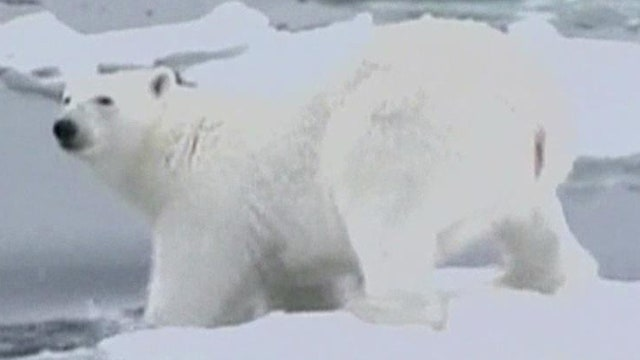 Group challenges polar bear listing in Supreme Court