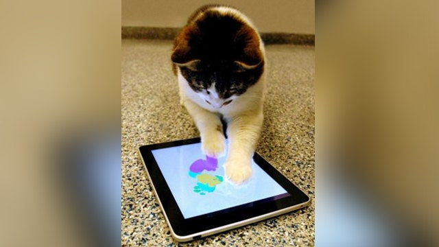 Should pets be pawing iPads?
