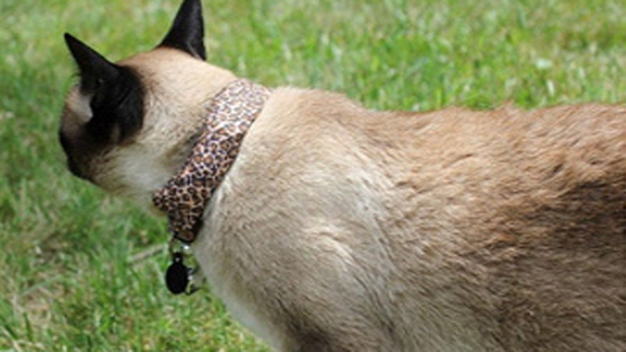 Cats fight cyber crime with the help of a new high-tech collar.