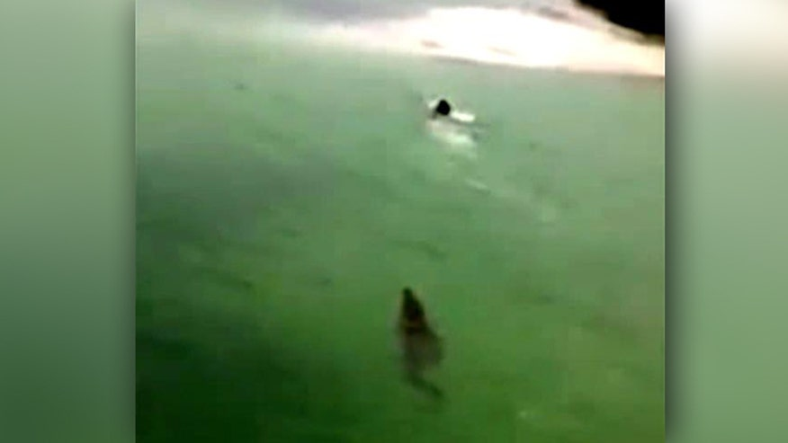 Bystander distracts predator while tourist swims for shore