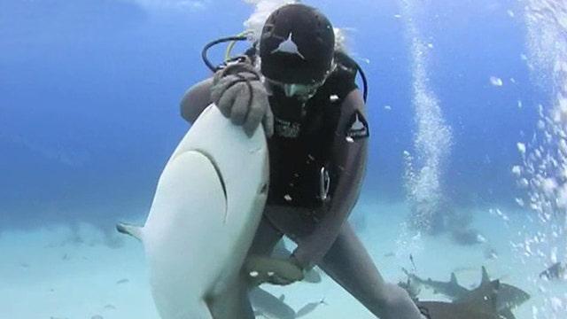 'Shark whisperers' lull ocean predators into trance