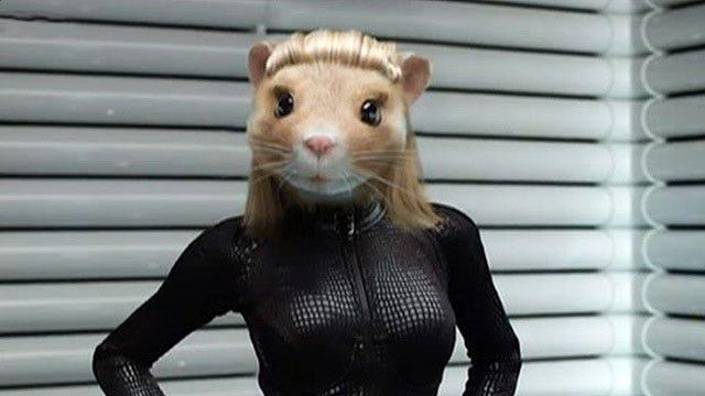 Hamster free adult video