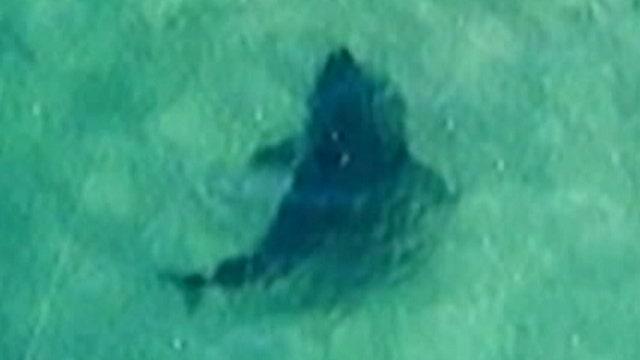 Shark hunters spot great whites near Cape Cod coast