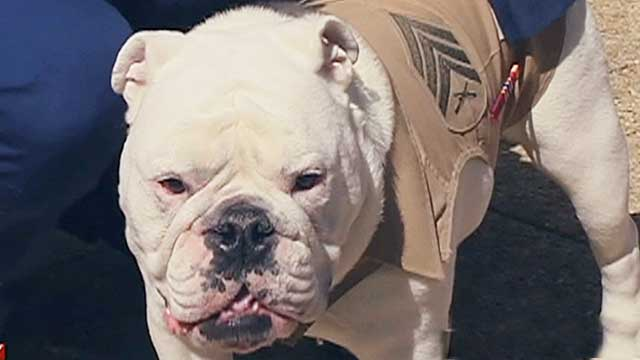 Changing of the guard for Marine Corps mascot