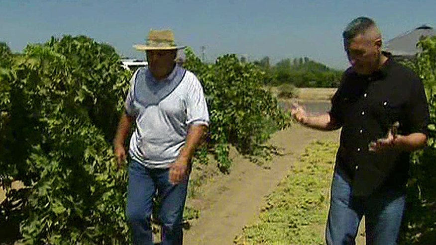 Calif. farmer battles the federal gov't over mandate