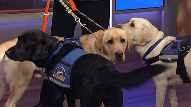 Non-profit trains dogs to assist the disabled