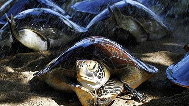 Man tries to bring 51 turtles into Canada in his pants