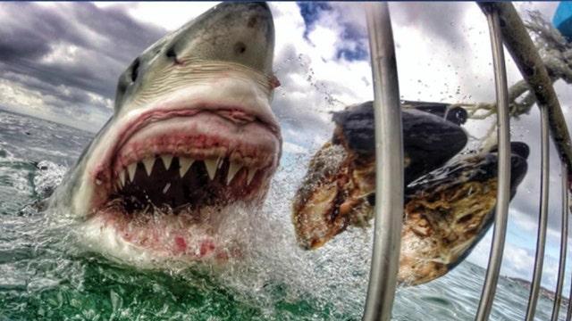 Teacher's amazing great white shark shot goes viral