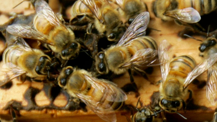 Swarm of bees attacks four people, killing one and stinging another 100 times