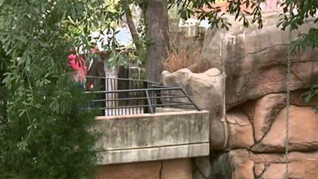 Boy, 3, injured after falling into Arkansas zoo's jaguar exhibit