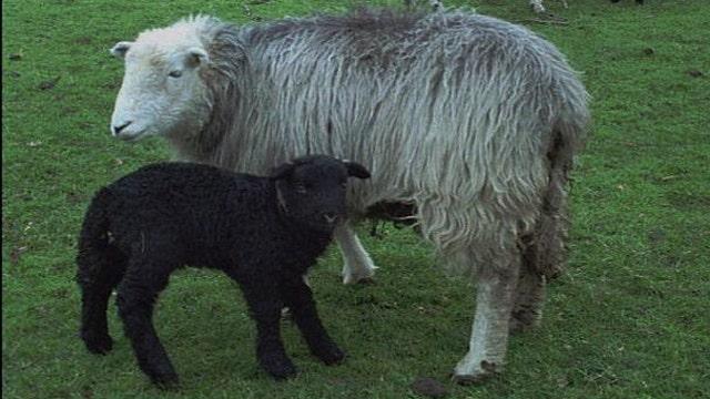 'Baa Baa Black Sheep' racist, sexist?