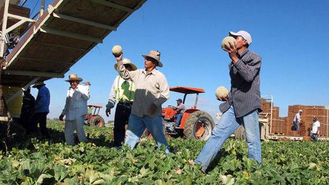 Obama administration preparing work permits for illegals