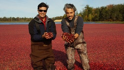 Carver, Massachusetts contains the greatest concentration of cranberry production in one place in the entire world. The town, just a few miles from Cape Cod, is home to major cranberry producers, whose fruits find their way into juices, sauces, and nutritional supplements.