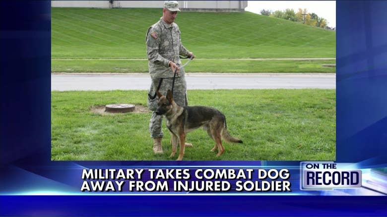 Combat Dogs For Adoption His Dog up For Adoption