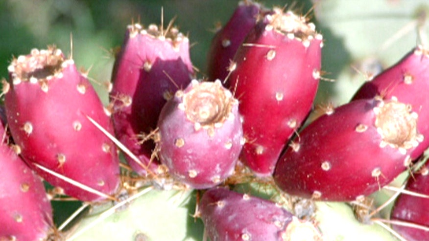 The cure to a stomach-turning hangover may be growing in the Arizona desert. Prickly pears are a cactus fruit, and studies show they help reduce symptoms when taken before drinking. Fox's Aalia Shaheed has the story.