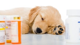 Destination Health: Dr. Manny gives some tips to keep your furry friends flu-free this season