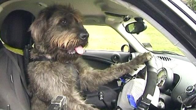 Pups put pedal to metal