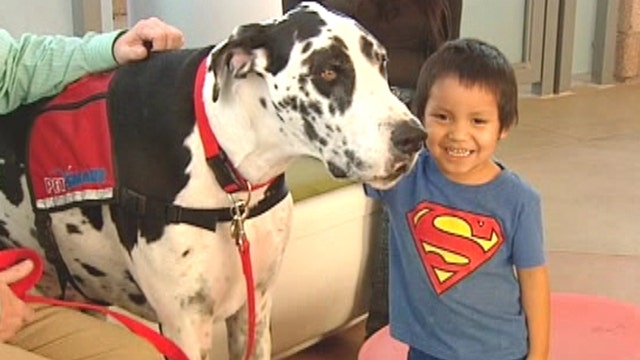 Gentle giant helps heal sick children