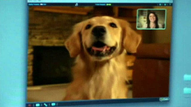New device lets owners video chat with their pets