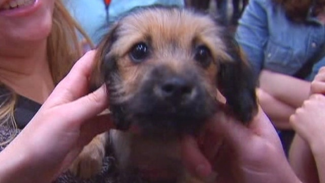 Puppy therapy for stressed college students