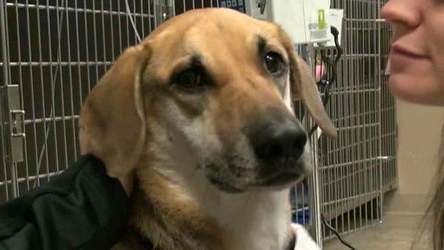 Dog lost in massive car accident found