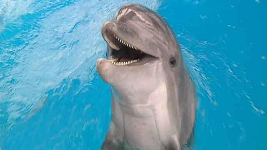 Dolphin survivor of BP Oil Spill nursed back to health