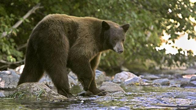 PETA blasts bear mauling victim