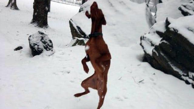 Dana Perino's dog photo a hot topic on Facebook