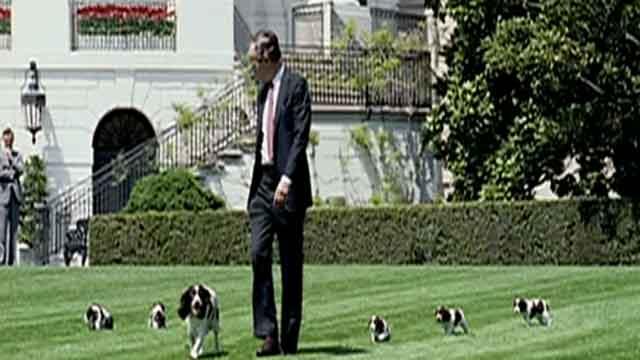 Fox Flash: White House Pets