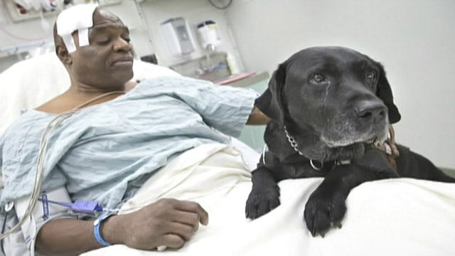 Guide dog saves blind owner who fell on subway tracks