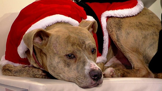 Paws for a Cause: Healing Haven Animal Fund
