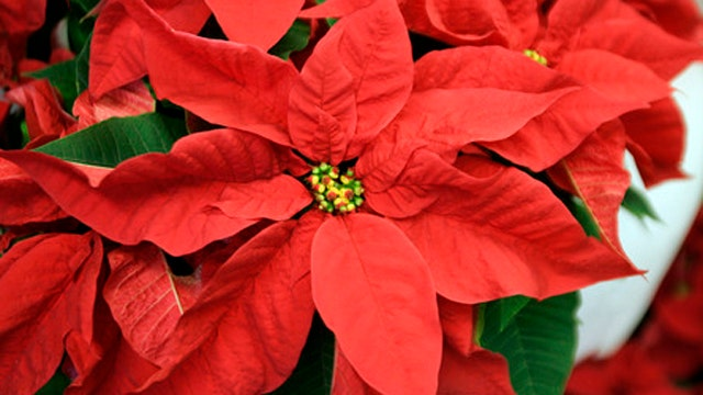 Common holiday health myths debunked