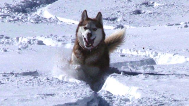 Dog saves skier's life