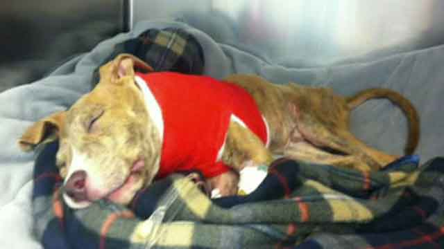 An update on 'Joey the dog'